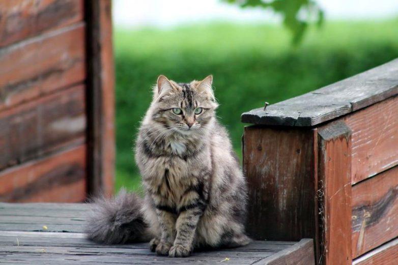 Почему кошка ждет у двери хозяев, когда они возвращаются домой