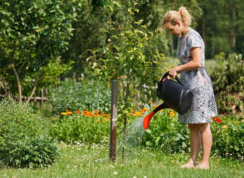 Сад: сезонные работы в августе