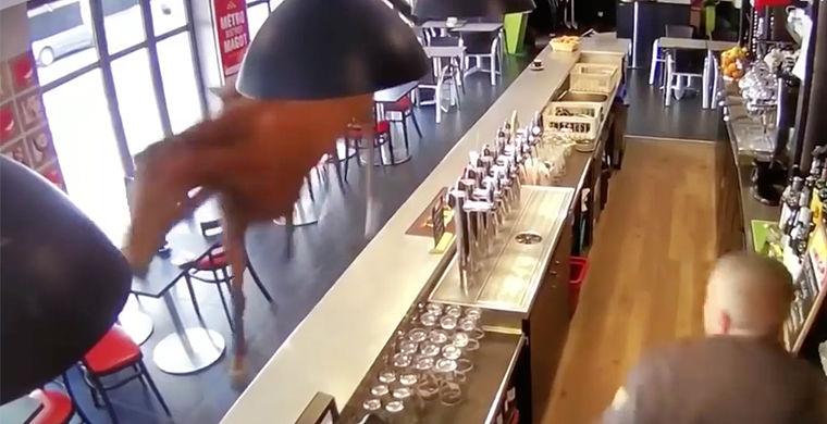 Скаковая лошадь ворвалась во французский бар и учинила хаос