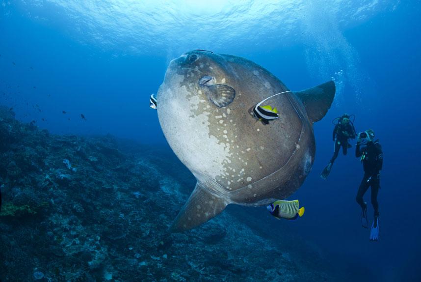 881 Жизнь в океане   подводные фотографии Дэвида Флитэма