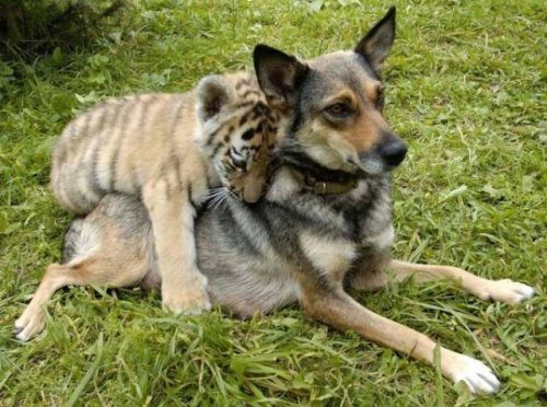 Замечательные примеры дружбы…