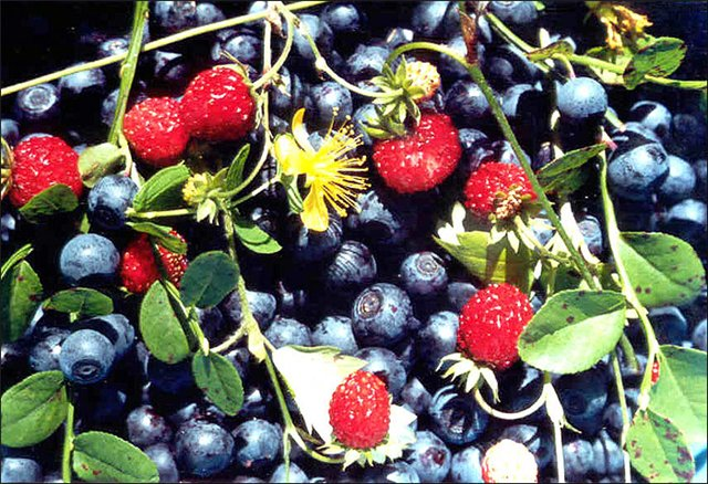 Вино из лесной ягоды в домашних условиях