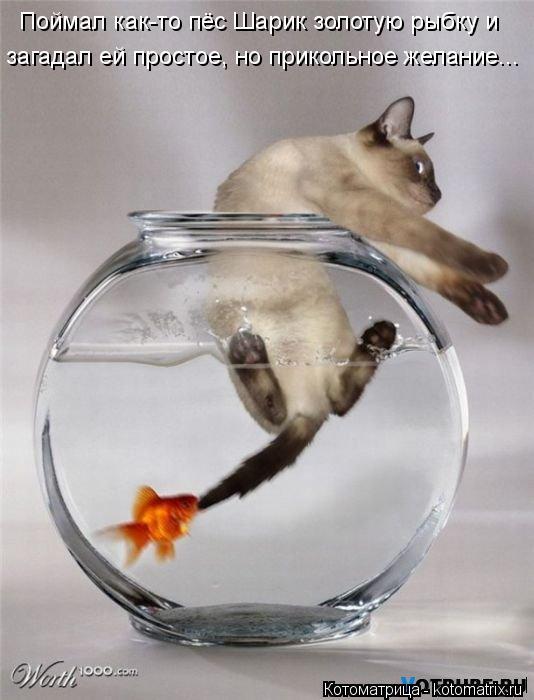 Котоматрица: Поймал как-то пёс Шарик золотую рыбку и  загадал ей простое, но прикольное желание...