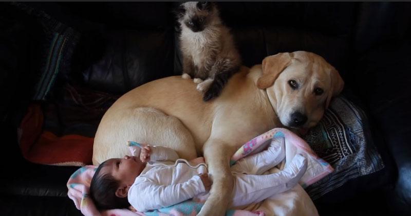 Мама оставила малыша наедине с питомцами всего на несколько секунд. Когда она вернулась, тут же схватила камеру!