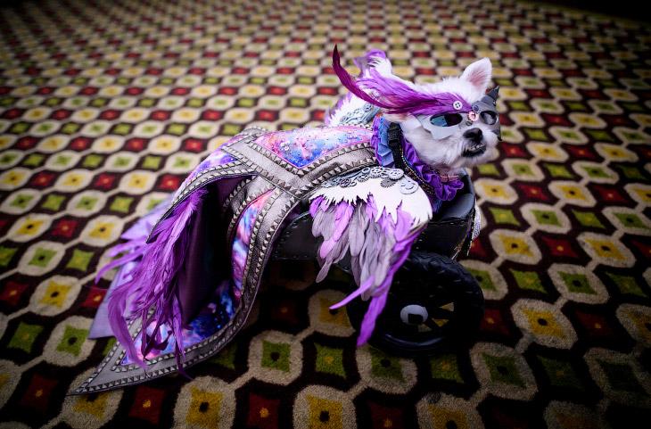 New York Pet Fashion Show: крупнейший в мире показ мод для животных