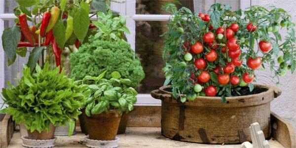 Сорта овощей для выращивания в контейнерах.