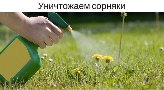 Уксус, соль и мыло уничтожат ненавистные сорняки