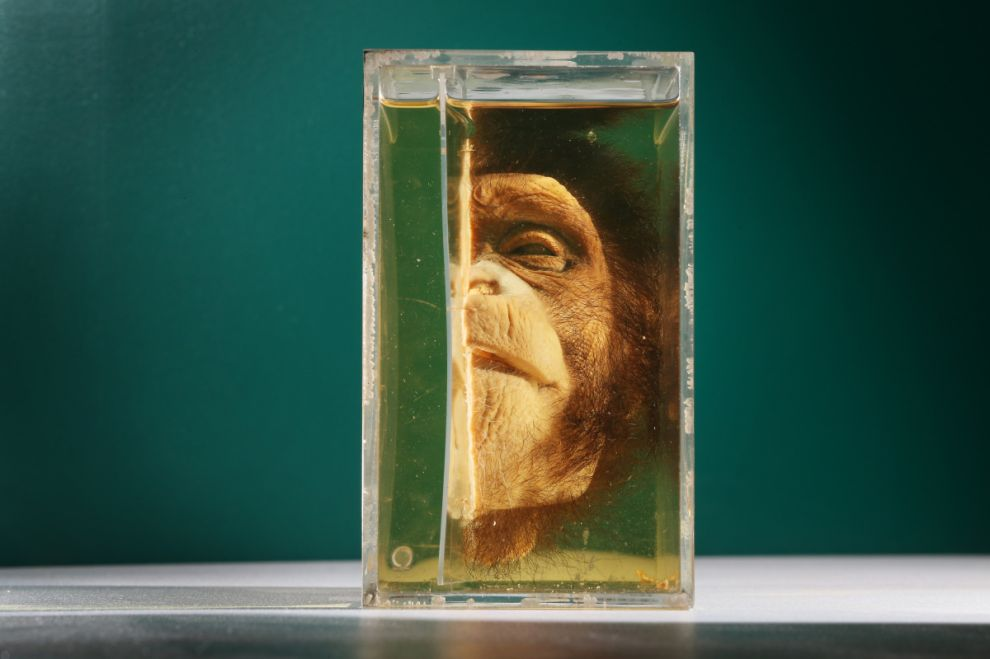 gmoz06 Лондонский музей зоологии и сравнительной анатомии Гранта