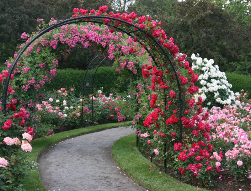 Красивые розы своими руками фото