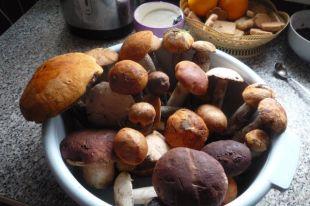 Когда можно будет сдавать грибы на переработку?