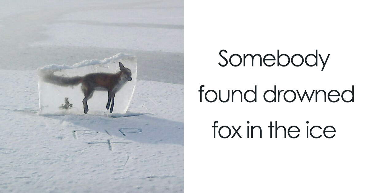 """10+ Times Nature Made Us Say """"NOPE"""" (WARNING: This List Might Be Too Scary For You)"""