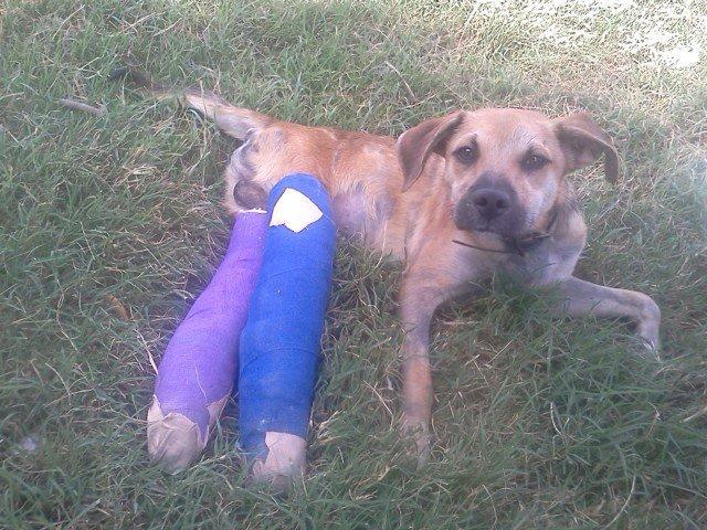 """""""Он никогда не сможет ходить!"""" Брошенного на дороге щенка парализовало после того, как его переехали несколько машин"""