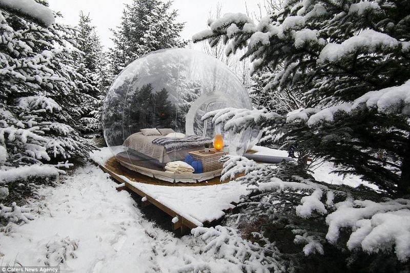 """Отель в Исландии: """"мыльные пузыри"""" с видом на звезды Отель, интересное, исландия, исландия фото, лес, необычные отели, туризм, туристу на заметку"""