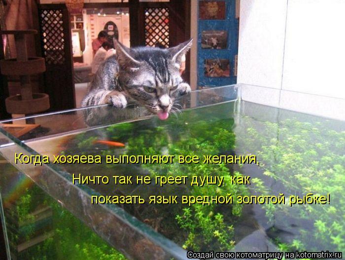 Котоматрица: Когда хозяева выполняют все желания, Ничто так не греет душу, как показать язык вредной золотой рыбке!