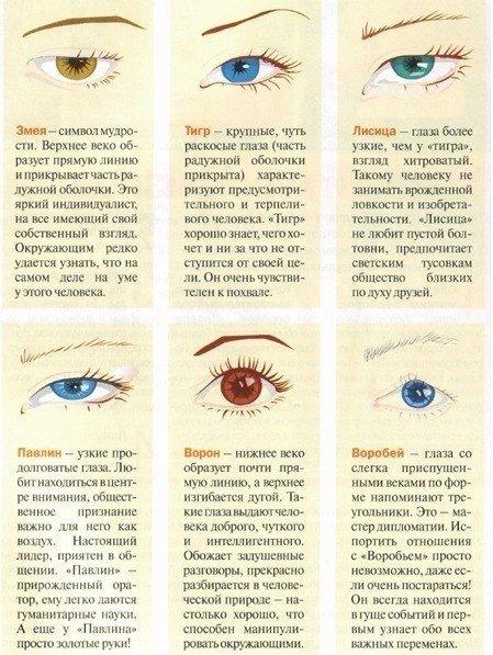 Характер по форме глаза