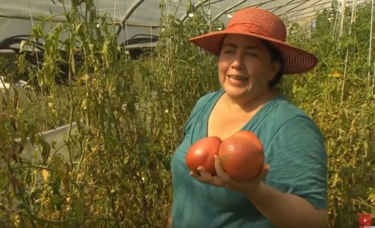 Германия: Штраф 25 000 евро, за выращивание овощей в огороде