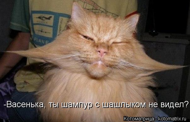 -Васенька, ты шампур с шашлыком не видел?