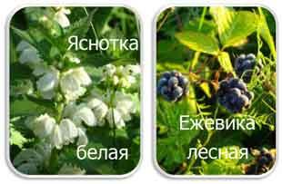 Какие травы очищают кровь и лимфу от химических веществ