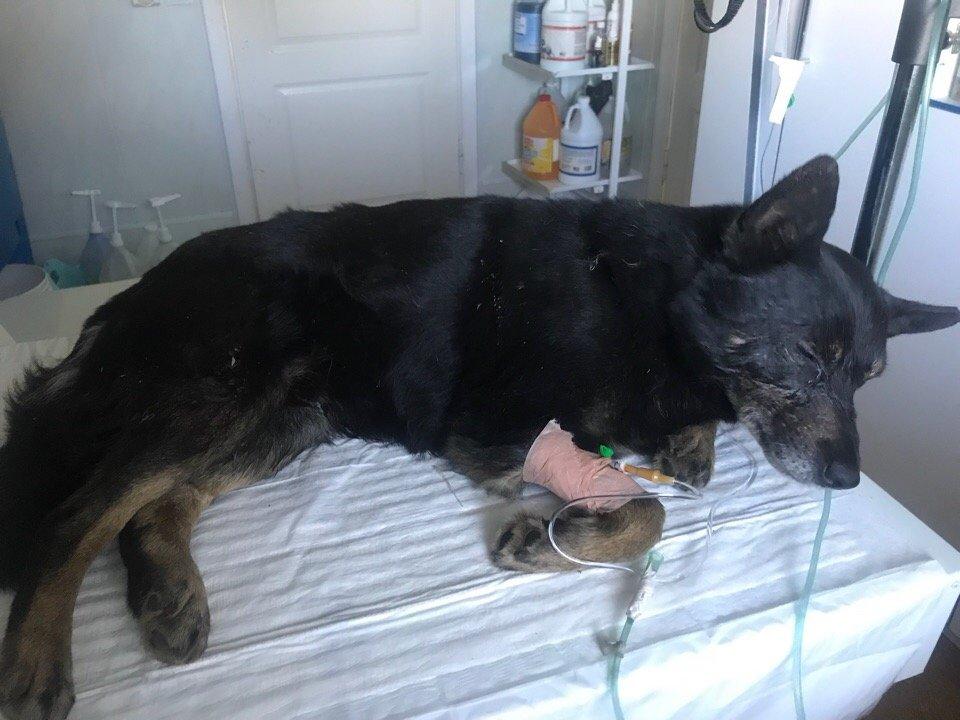 В Оренбурге суд рассмотрит дело об избиении бездомной собаки Бублика