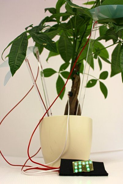 Учёные смогли превратить комнатное растение в электростанцию