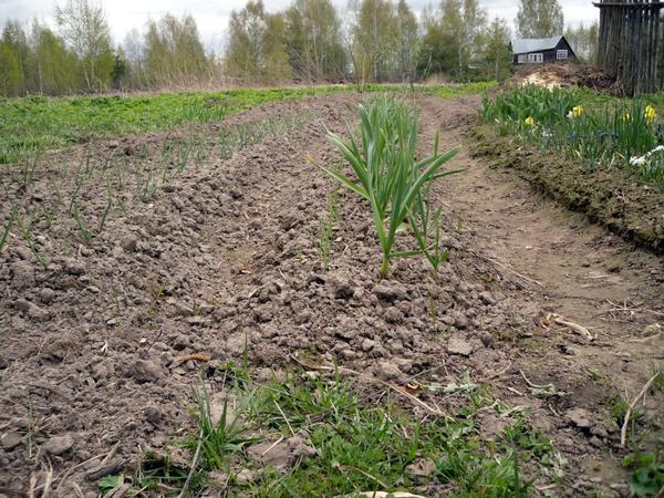 Перекопка - средство борьбы с сорняками