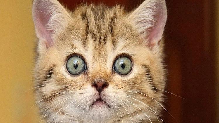 Испуганного ростовского котёнка назвали Ветераном