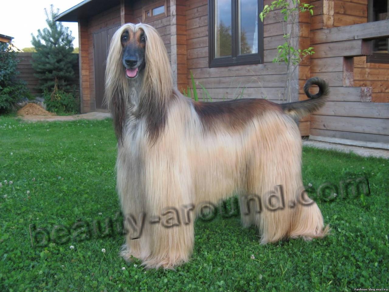 ТЕРЕМОК. Самые красивые породы собак