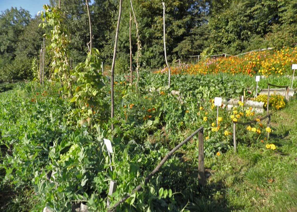 Защита растений от избыточного солнца. Борис Бублик про кулисы