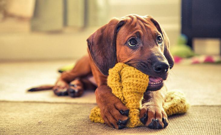 ������� �������� ���������� Kennel Club Dog Photographer 2016