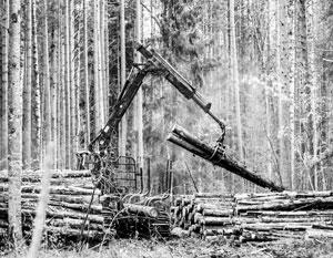 Россия пригрозила Китаю запретить экспорт древесины