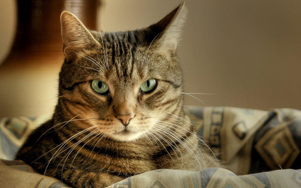 Каждая кошка таит в себе магию