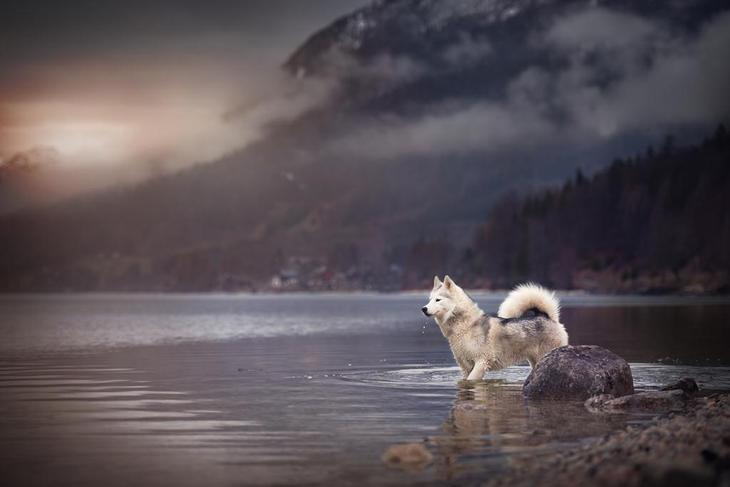 Верные друзья человека. Трогательные фотографии собак