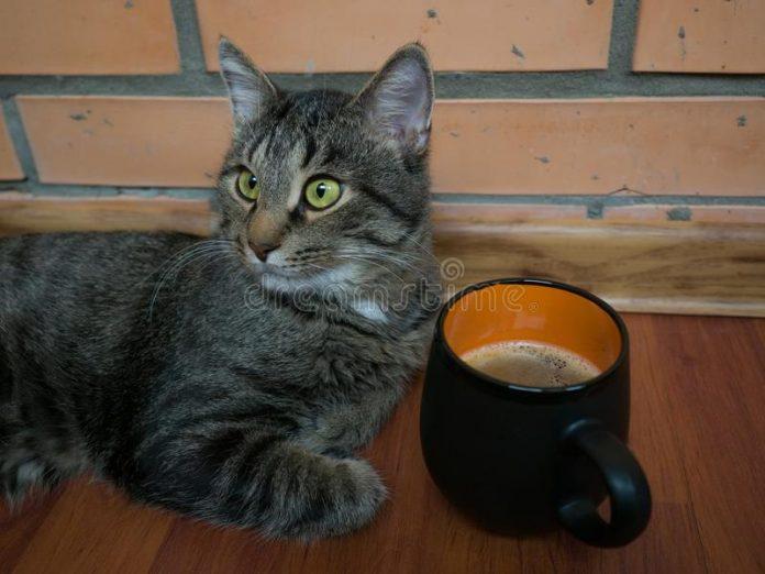 Этот кот явно начитался разных романов!