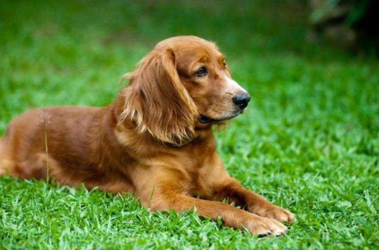 Как общение с собакой влияет на наш организм