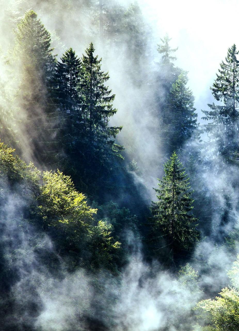Фотоальбомы натуристов в лесу 5 фотография