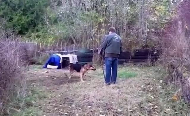 Собаке, которая просидела вс…