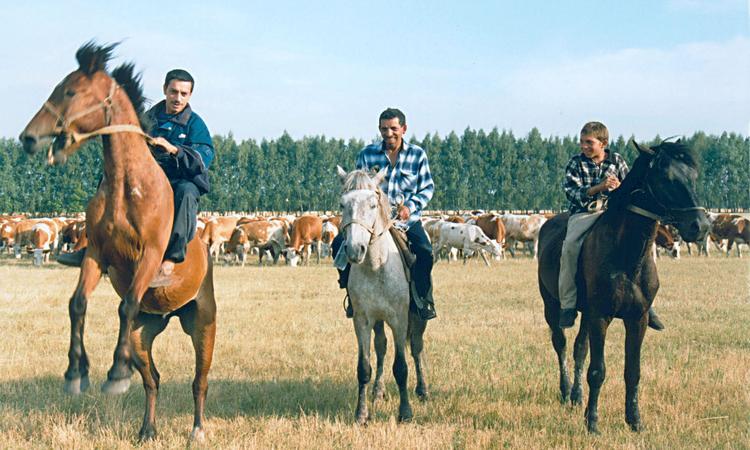 Ромалы счастливы в России: Работу Путина одобрили 90% цыган