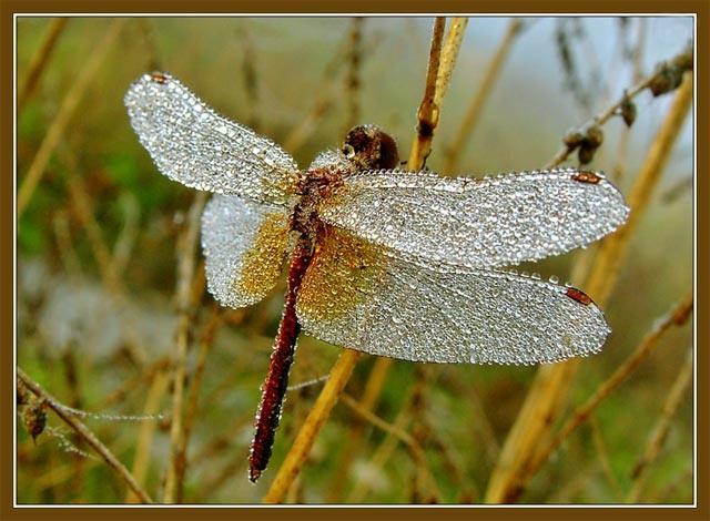 Стрекоза в траве
