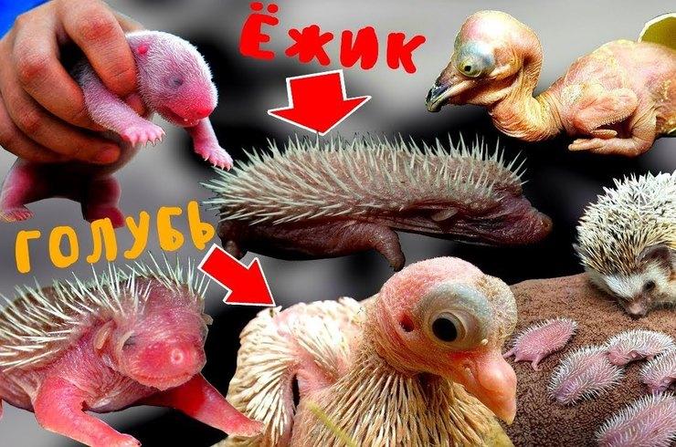 Как выглядят новорожденные детеныши разных животных