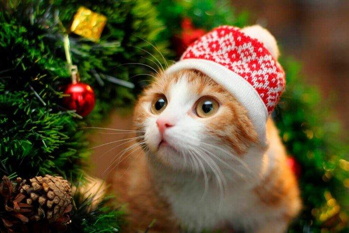 Антинаучные приметы про Новый год, в которые приятно верить