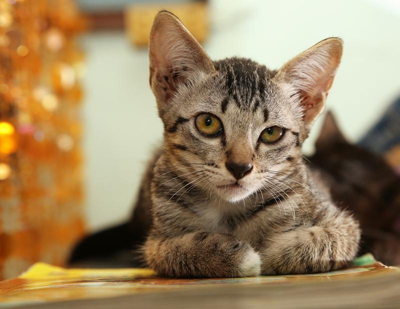10 привычек (твоих, да-да), которые бесят твоего котика
