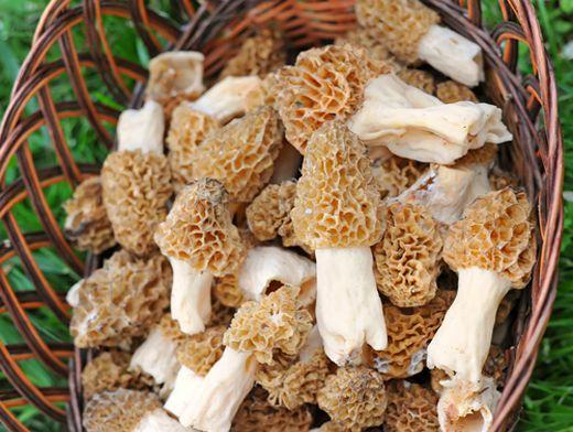 Шампиньоны, сморчки и строчки – первые весенние грибы