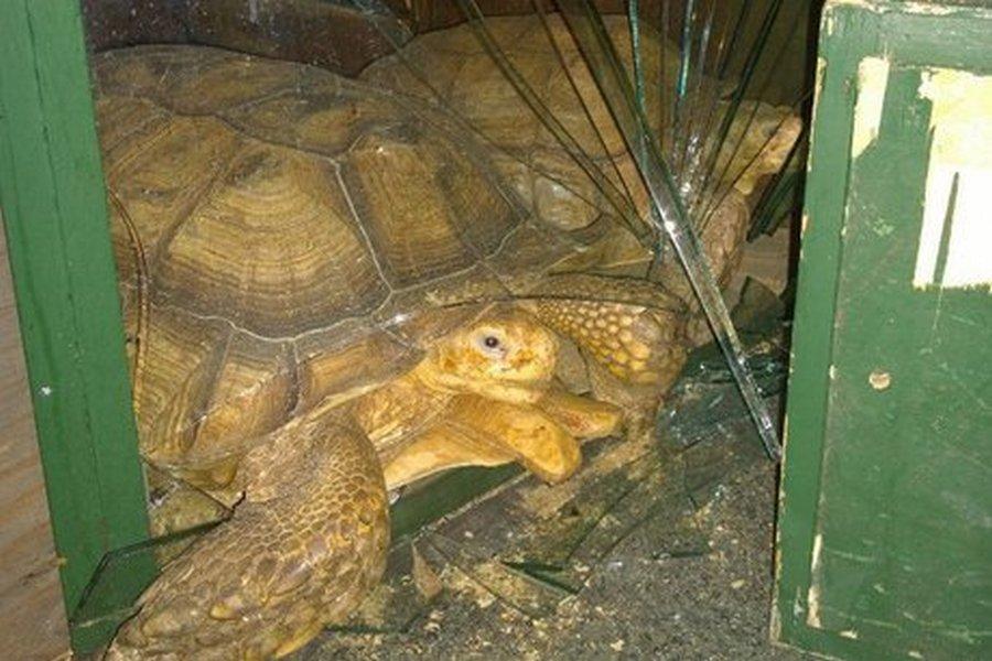 Черепахи-рецидивисты опять рвутся на свободу
