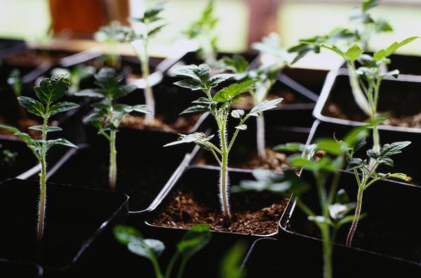 Как вырастить свежие овощи дома зимой