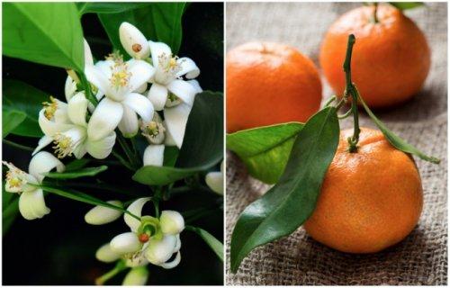 Цветочки и «Ягодки»