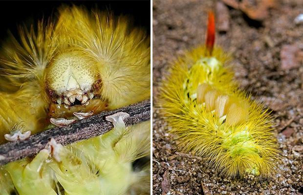Самые странные насекомые
