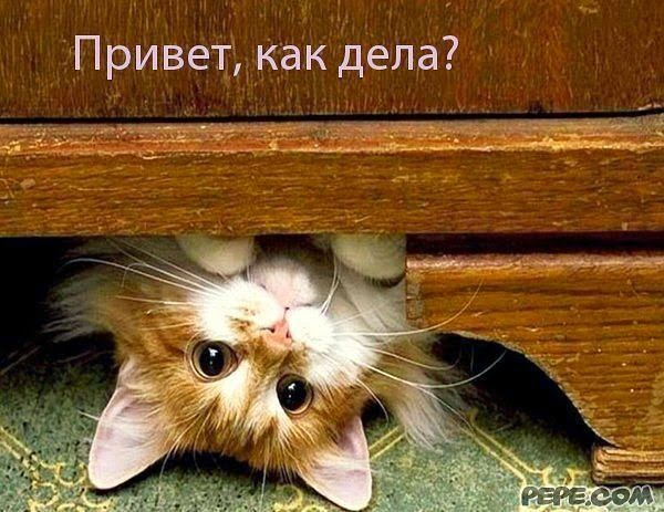 Утренний кошачий монолог))