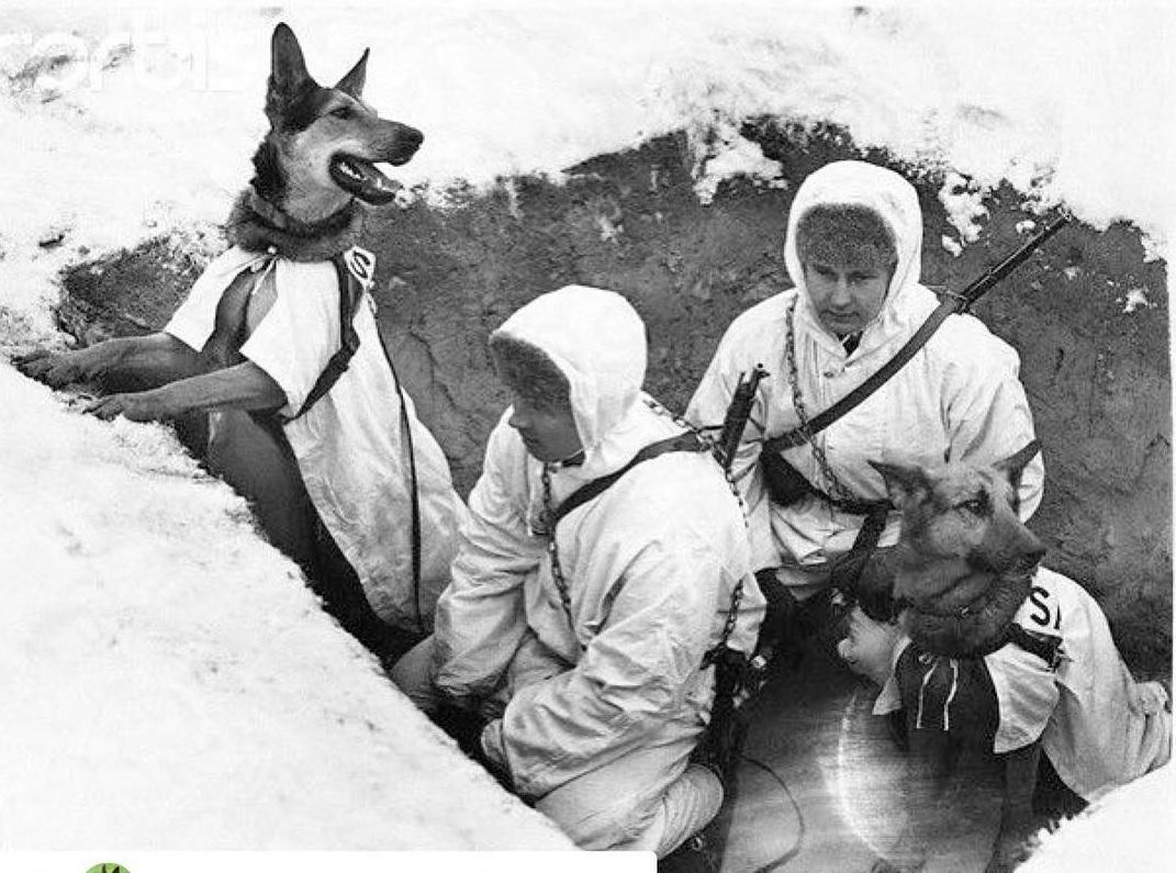 Верные псы войны и другие