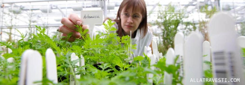 Магическое правило «ЛЁГКОЙ РУКИ»: что лежит в основе разных реакций растений на заведомо одинаковые условия