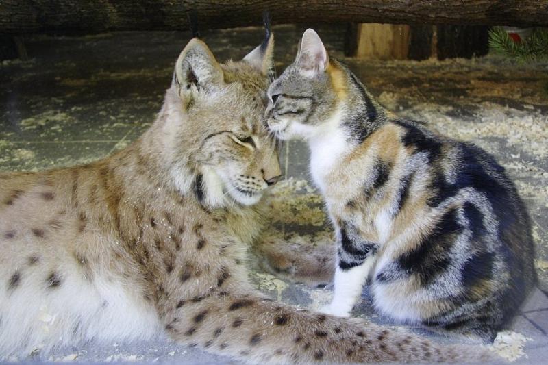 Линда и Дуся — неразлучные друзья